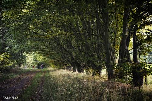autumn trees people fall scotland track tunnel parade peebles vignette beech scottishborders