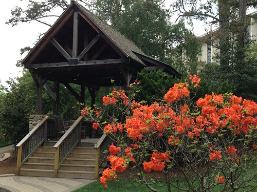 wood orange campus spring landscaping flame azalea gable unca