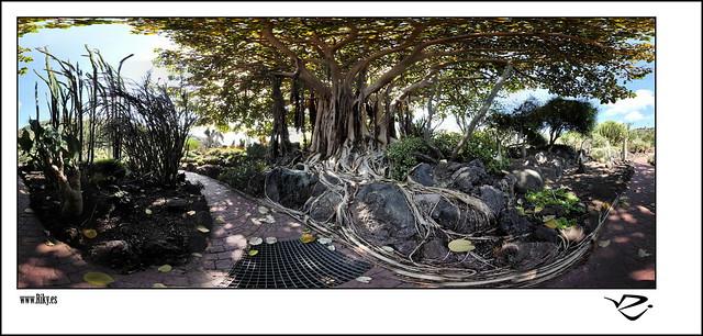 :: Jardin de Cactus III 360º ::