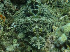 zo, 09/10/2011 - 03:07 - 072. Zoek de griezel, Hideaway Island onderwater