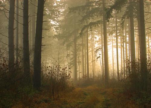 old trees mist nature fog canon washingtonstate t1i matthewreichel