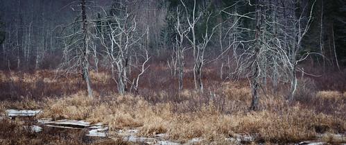 2391 ice maine steuben washingtoncounty winter trees deadtrees stream downeastsunrisetrail usa manipulations hiking locationrecorded weather