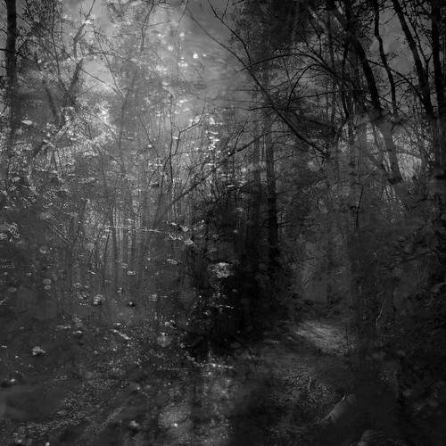 trees winter shadow blackandwhite abstract ice forest square pond woods nikon path doubleexposure explored hellernaturecenter d5000 noahbw