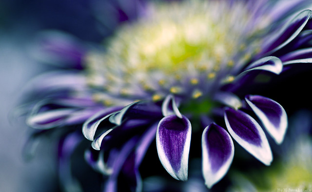 319 of 365 - Purple on Blue