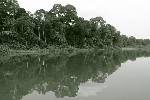 Amazon, Peru | by Mathew Knott