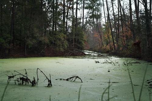 autumn trees nature water creek landscape pond woods louisiana hiddencreek mrgreenjeans gaylon canonef50mmf18ii gaylonkeeling