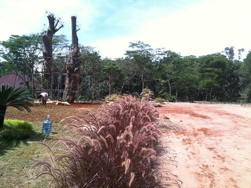 ui universityofindonesia adansoniaerection baobaberection