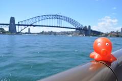 Pulpito @ Sydney Bay Bridge (Sydney, Austràlia)