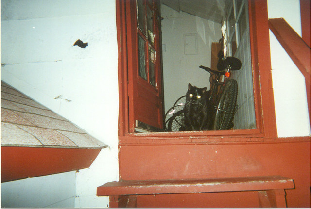 Whiskers at the back door, 2000