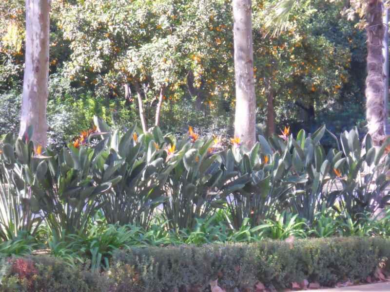 Parque Maria Luisa Sevilla 5