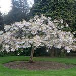 Blossom tree & Eva