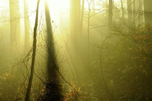 deep fog   by Cast a Line
