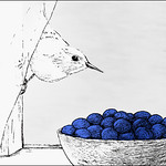 nuthatch and berries