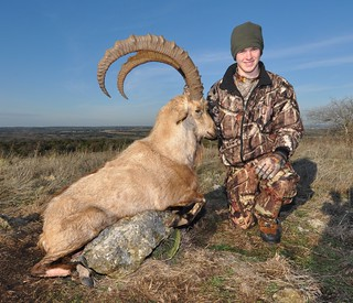 2011 Gold Medal Nubian Ibex | by Hunting Texas Trophies | VBHARRE Ranch