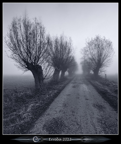 trees mist field fog sunrise canon blackwhite belgium belgique belgië 1020mm erlend willows muizen 60d erroba robaye