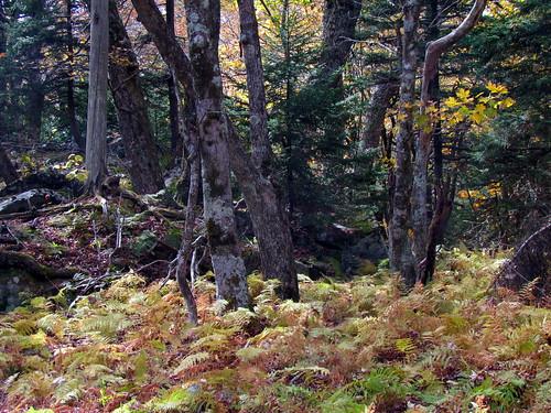 statepark nature virginia autumncolors graysonhighlands