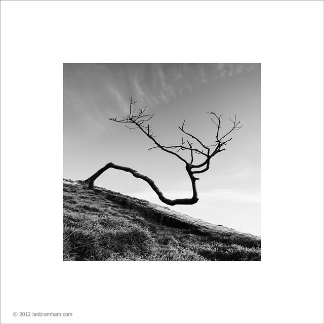 Twisted Tree #2
