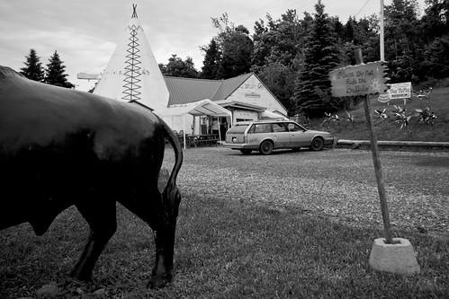 souvenirs buffalo aluminum tourist americana fiberglass teepee roadsideattraction giftshop attraction tipi midcentury thetepee preinterstate pleasedonotridethebuffalo