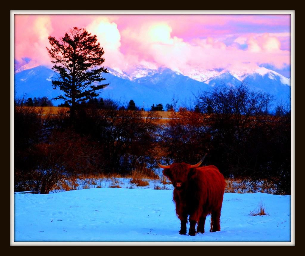 Joyeux Noel Twilight.Twilight In The Northern Rockies Belle 2 Dog Farm
