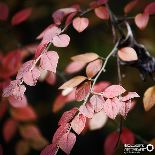 Last Leaves | by Hexagoneye Photography