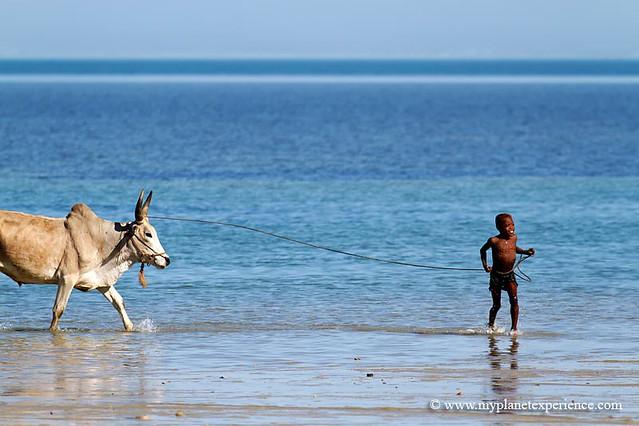 Madagascar - Slice of life