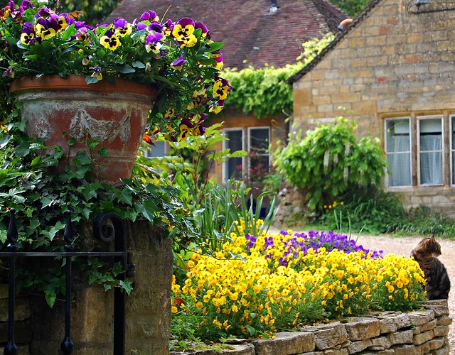 The Resident Cat Presides Over the Entrance to its Front Garden - Blockley Village, Cotswolds, Gloucestershire, England
