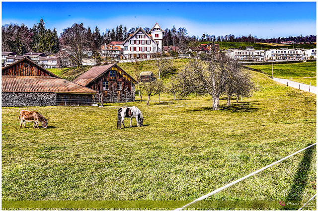 Spring day on winter - Steffisbourg_D755642