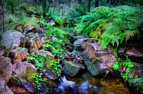 Brookdale Creek | by evangelique