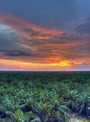 sunset canon landscape hdr oilpalm