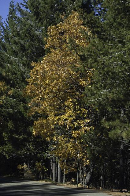 Yosemite: The Changing