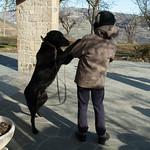 Affetto canino