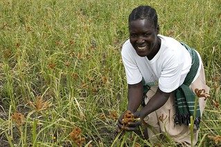 Harvesting hope after war in the fields of northern Uganda