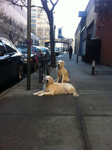 Daily Deli Dogs 24 January 2012 | by epc