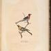 A description of sixteen new species of North American birds