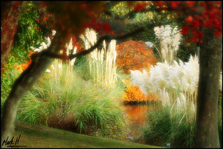 A Corner of Wakehurst | by Mark H ~ Delight In Light ★ ✟ ★