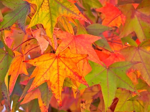 california color fall leaves losangeles foliage gettymuseum gettycenter gettygarden alberoefoglia blinkagain bestofblinkwinners blinkagainsuperstars blinksuperstar