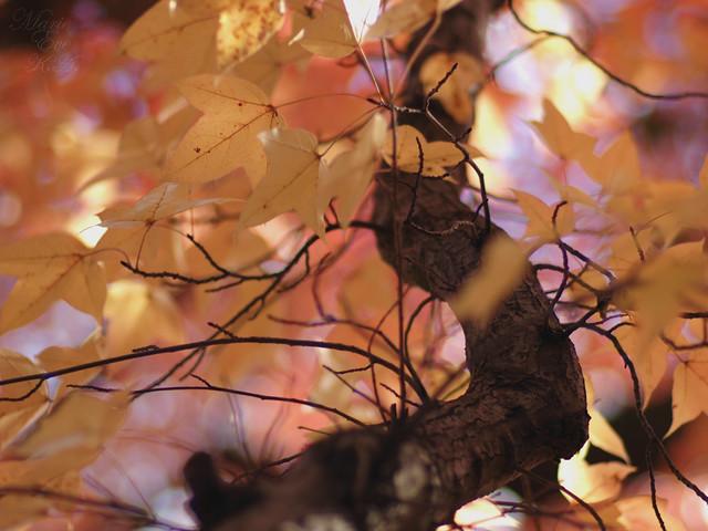 Late Autumn #2