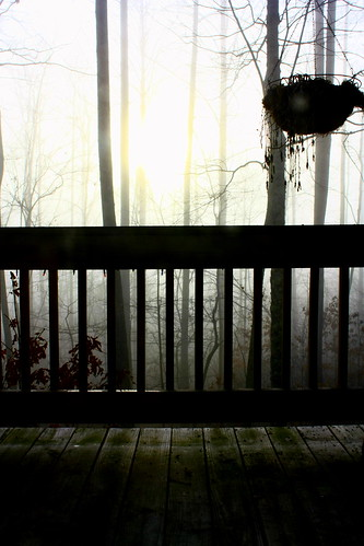 morning trees tree nature fog outdoors foggy deck