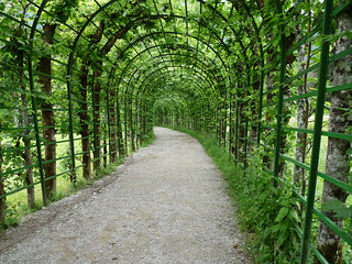 The green tunnel | by Lorenzo Bl
