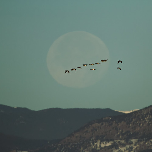 usa moon geese colorado luna rockymountains canadageese greenwoodvillage canon7d ef14xtc ef500mmf4lis