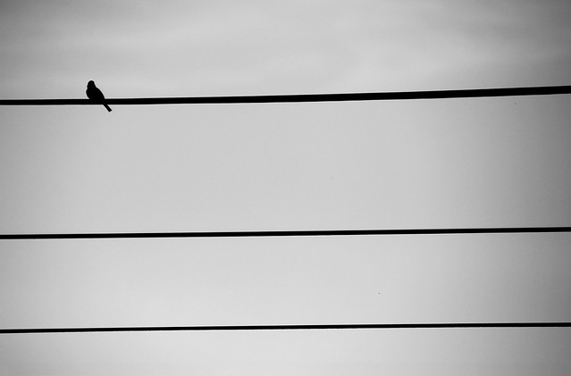 Bird on Line