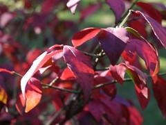 火, 2010-11-02 13:53 - セントラルパークの紅葉