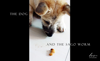 The Dog and The Sago Worm | by leo_theonlyone
