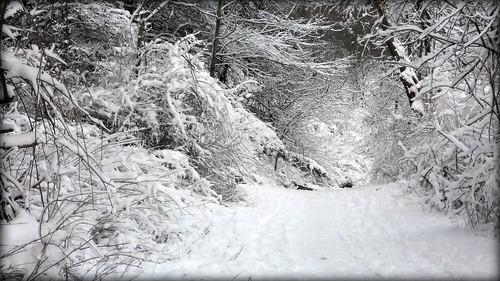 winter snow nikon coolpix s3000 blm18 blmiers2