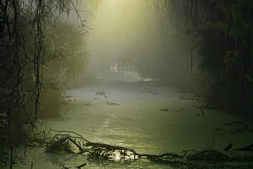 park morning light usa nature water landscape nikon florida wildlife swamp topaz lakelandflorida cbbr d7000 circlebbarreserve nikssoftware