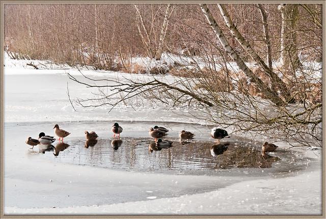 Winterlandschap -3-