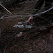 Litter bag harvesting february 9th 2012