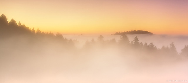 Out of the Fog - Mt Tam
