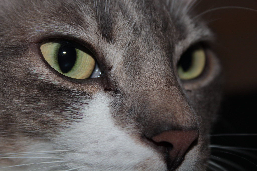Cat eyes / Olhos de gato
