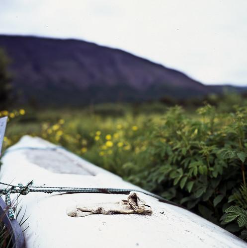 """Image titled """"Sock on an upturned boat, Laugervatn, Iceland."""""""